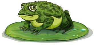 Frog. Illustration of a close up frog vector illustration