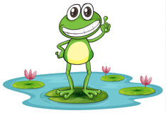 A frog Stock Photos