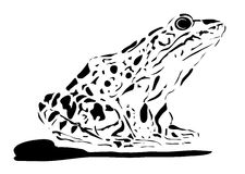 Frog illustration Stock Image