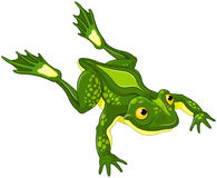 Frog. Illustration of very cute frog royalty free illustration