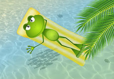 Frog on inflatable mattress Stock Photos