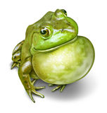 Frog Inflated Throat. Frog with an inflated throat as a green amphibian communicating as a natural symbol of animal conservation and environmental education for Royalty Free Stock Photography