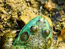 Frog inside Zhanshan Temple Stock Image