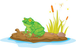 Frog on island Stock Images