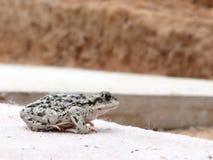 Frog jump Stock Photo