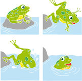 Frog jumping. In four phases Royalty Free Stock Image