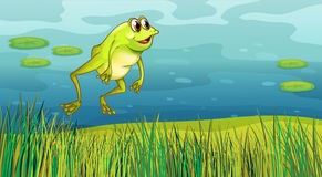 A frog jumping in the grass Stock Photos
