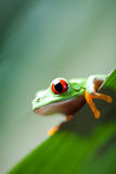 Frog in the jungle on colorful background Royalty Free Stock Images