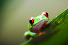 Frog in the jungle on colorful background Stock Photos