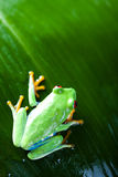 Frog in the jungle on colorful background Royalty Free Stock Photos