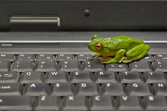 Frog on keyboard Royalty Free Stock Photo
