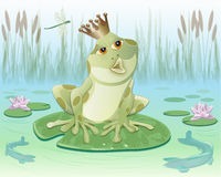 Frog king sitting on Water lily leaf Stock Photos