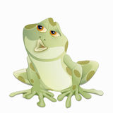 Frog kiss Royalty Free Stock Photos