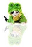 Frog kitten. A baby kitten in a frog costume Royalty Free Stock Photography