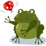 Frog with ladybug Royalty Free Stock Images