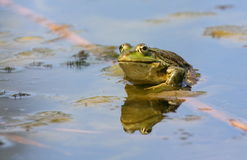 The frog lake. Sits on the bank of a reservoir Royalty Free Stock Photos