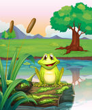 A frog at the lake Stock Photo