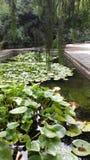 Frog lake Stock Photography