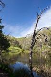 Frog Lake Royalty Free Stock Image