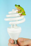 Frog on lamp Royalty Free Stock Photography