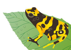 Frog on leaf Royalty Free Stock Image