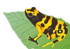 Frog on leaf Royalty Free Stock Image