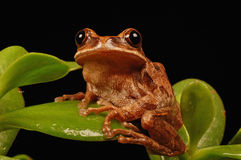 Frog on leaf Stock Image