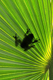 Frog on leaf. Animal silhouette Royalty Free Stock Images