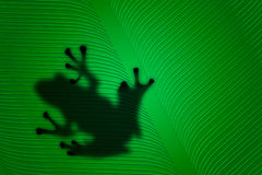 Frog on a leaf. Computer created image of the silhouette of a frog on a leaf Royalty Free Stock Photography