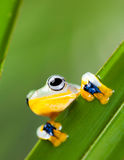 Frog on the leaf on colorful background Royalty Free Stock Photo