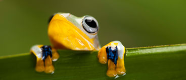 Frog on the leaf on colorful background Stock Photo