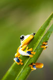 Frog on the leaf on colorful background.  Royalty Free Stock Images