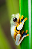 Frog on the leaf on colorful background.  Stock Photography