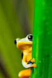 Frog on the leaf on colorful background Stock Image