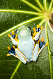 Frog on the leaf on colorful background.  Stock Images