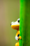 Frog on the leaf on colorful background Stock Images