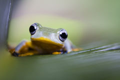 Frog on the leaf. On colorful background Royalty Free Stock Image