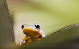 Frog on the leaf. On colorful background Stock Images