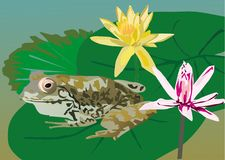 Frog on leaf near flowers Royalty Free Stock Photo