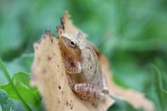 Frog on leaf Stock Photos