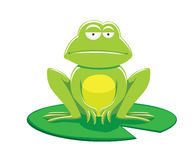 Frog on Leaf Vector Illustration Stock Images