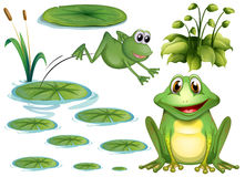 Frog and leaves Stock Images