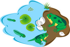 Frog lifecycle Royalty Free Stock Images