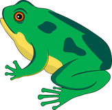 Frog lifecycle 2 stock photos
