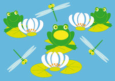 Frog and lilies. Frogs troll songs on the lake among the lilies and dragonflies Stock Photos