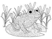 Frog on a lily in the swamp coloring book for adults vector Stock Photo