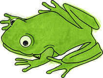 Frog. Little green frog cartoon with a smile Royalty Free Stock Images