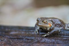Frog On Log Stock Photography