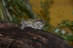 Frog on a log royalty free stock photos