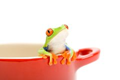 Frog looking out of pot. Frog looking out of cooking pot for help. a red-eyed tree frog (Agalychnis callidryas), closeup isolated on white Stock Image